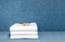 Комплект белых полотенец гостиницы сложил на голубой предпосылке штабелировано Стоковое Изображение RF