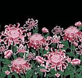 Комплект ботанической хризантемы цветков Стоковая Фотография RF