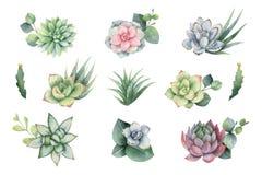 Комплект вектора акварели с листьями и succulents евкалипта бесплатная иллюстрация