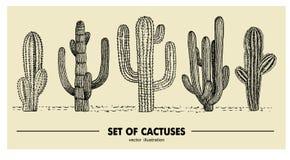 Комплект вектора кактуса нарисованного рукой Иллюстрация эскиза Различные кактусы в monochrome стиле иллюстрация штока