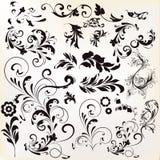 Комплект вектора каллиграфических элементов для дизайна Каллиграфическое vec Стоковое Фото