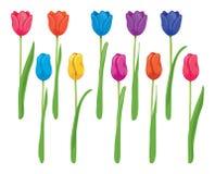 Комплект вектора красочных тюльпанов Стоковая Фотография RF