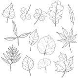 Комплект вектора листьев дерева эскиза иллюстрация штока