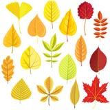 Комплект вектора листьев дерева бесплатная иллюстрация