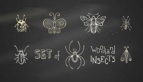 Комплект вектора насекомых полесья мела Стоковое Изображение