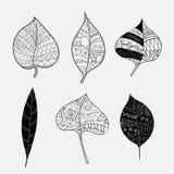 Комплект вектора стилизованных листьев дерева Упаденные листья осени с орнаментами Собрание черно-белых заводов с Стоковая Фотография RF