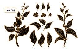 Комплект ветвей куста чая Силуэт вектора черный изолированный на белой предпосылке иллюстрация вектора