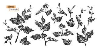 Комплект ветви кофе также вектор иллюстрации притяжки corel иллюстрация штока