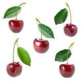 комплект вишни Стоковое Фото