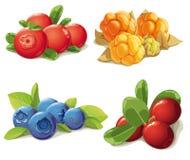 Комплект возмужалых ягод Стоковое Изображение RF
