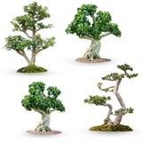 Комплект дерева бонзаев с путем клиппирования Стоковое Изображение RF