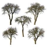 Комплект деревьев без листьев Стоковое фото RF