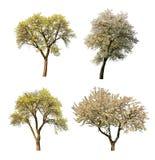 Комплект зацветая дерева Стоковая Фотография RF