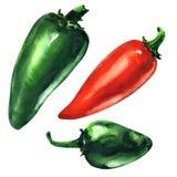 Комплект зеленых, накаленных докрасна перцев chili, изолированного перца Jalapeno, руки нарисованная иллюстрация акварели на бели иллюстрация штока