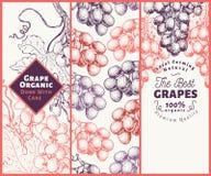 Комплект 3 знамен виноградины Шаблон рамки ягоды виноградины Нарисованная рукой иллюстрация плодоовощ вектора Выгравированный год стоковые фотографии rf