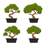 Комплект значка дерева бонзаев Стоковое фото RF
