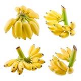 Комплект зрелого банана приносить на белой предпосылке Стоковая Фотография