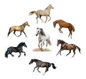 Комплект изолированных лошадей стоковая фотография