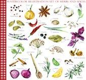 Комплект иллюстрации акварели трав и специй иллюстрация штока