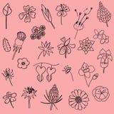 Комплект иллюстрации вектора нарисованного рукой doodle лист цветка как grap стоковая фотография rf