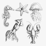 Комплект иллюстрации морской жизни вектора Вручите вычерченного морского конька, морской звёзды, кальмара, медузы, омара Изолиров иллюстрация вектора