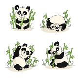 Комплект иллюстраций с новичком панды Усаживание панды, еда, играя Стоковая Фотография