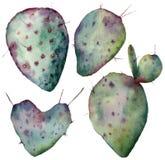 Комплект кактуса акварели Opuntia покрашенный рукой изолированный на белой предпосылке Иллюстрация для дизайна, печать, ткань или Стоковое Изображение