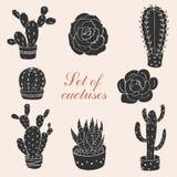 Комплект кактусов и succulents Стоковое Изображение RF