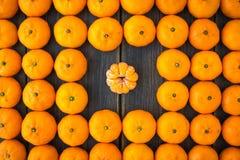 Комплект Клементинов или алжирских мандаринов Стоковые Фото