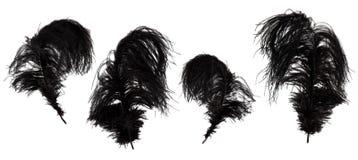 Комплект красивых, черных пер marabou Стоковое фото RF