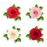 Комплект красного цвета, пинка и белых роз также вектор иллюстрации притяжки corel иллюстрация вектора