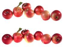 комплект красного цвета яблока Стоковые Изображения RF