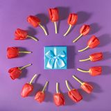 Комплект красных тюльпанов с голубой предпосылкой пурпура подарочной коробки Стоковые Изображения