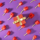 Комплект красных тюльпанов с красной предпосылкой пурпура подарочной коробки Стоковое Изображение RF