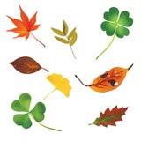 комплект листьев иконы Стоковые Изображения