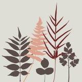 комплект листьев иллюстрации Стоковая Фотография
