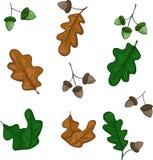 Комплект листьев и жолудей дуба бесплатная иллюстрация
