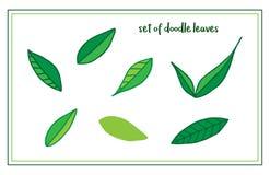 Комплект листьев нарисованных рукой иллюстрация вектора