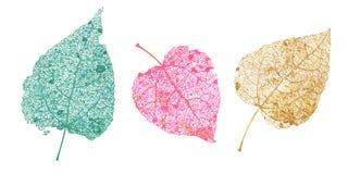 Комплект листьев скелетов Упаденная листва для дизайнов осени Естественные лист осины и березы Покрашенная иллюстрация вектора Стоковое Изображение RF
