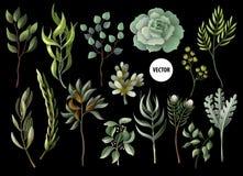 Комплект листьев травы и succulent растительности в стиле акварели Евкалипт, магнолия, папоротник и другая иллюстрация вектора иллюстрация вектора