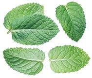 Комплект листьев spearmint или листьев мяты изолированных на белом backgro Стоковое Изображение RF