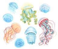Комплект медуз иллюстрация вектора