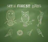 Комплект мела вектора птиц леса на предпосылке классн классного Стоковые Фотографии RF