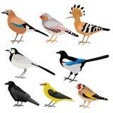 Комплект милых смешных смешных птиц бесплатная иллюстрация