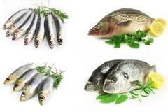 комплект морского пехотинца рыб Стоковые Фотографии RF