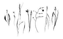 Комплект нарисованной рукой краски щетки полет травы и цветки поля Элементы стиля Grunge покрашенные чернилами Вектор изолированн Стоковые Фото