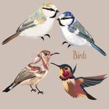 Комплект нарисованных рукой птиц вектора Стоковые Изображения RF