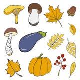 Комплект нарисованных рукой элементов doodle о осени Грибы, листья, тыква, баклажан, жолудь предпосылка рисуя флористический вект