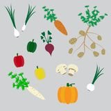 Комплект овощей - Vegetable вектор Стоковые Фотографии RF