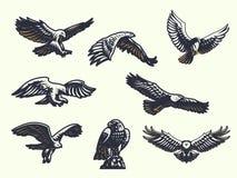 Комплект орлов вектора иллюстрация штока